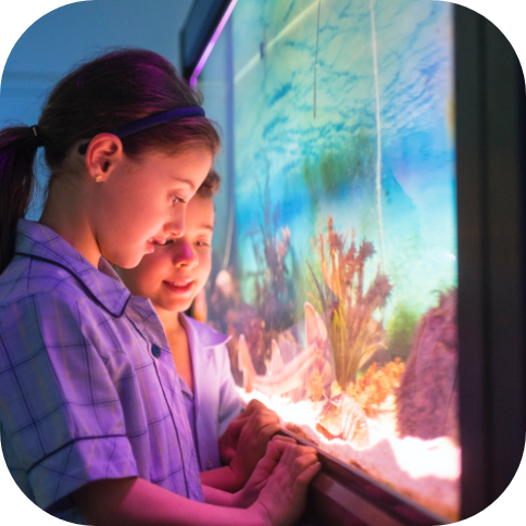 Marine Discovery CentreValued at $1,200 Bring your whole class for full day excursion to the Marine Discovery Centre (2 x prizes available).