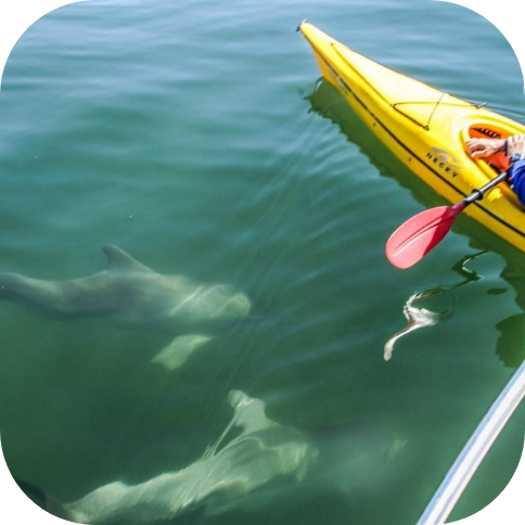 Adventure KayakingValued at $140Gift Voucher for the Dolphin Sanctuary and Ships Graveyard Kayak Tour for 2 adults and 2 children (2 X prizes available).
